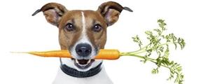 Cosa dare da mangiare ai Cani Adulti
