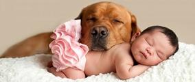 I cani più adatti ai bambini